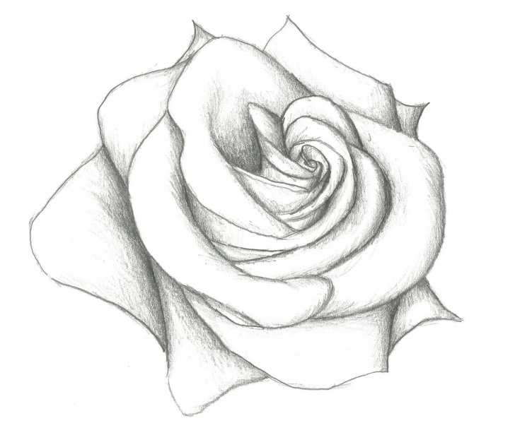 Marvelous Rose Pencil Drawing Step By Step Lessons Easy Pencil Drawing Of Rose 12 Model Easy Pencil Drawings Of Hearts Pics