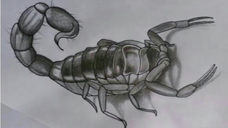 Marvelous Scorpion Pencil Drawing Techniques for Beginners How To Draw Scorpion Image