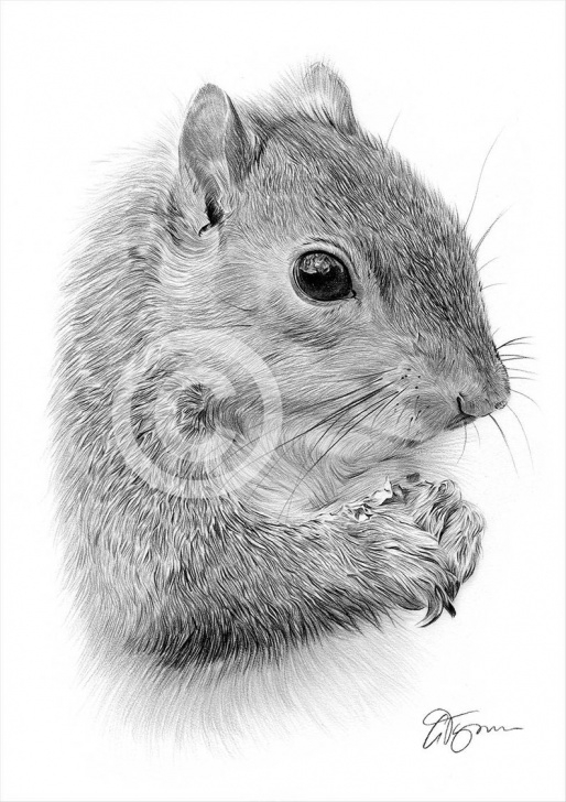 Marvelous Squirrel Pencil Sketch Ideas Grey Squirrel Artwork - Pencil Drawing Print - British Wildlife Art -  Artwork Signed By Artist Gary Tymon - 2 Sizes - Pencil Portrait Images