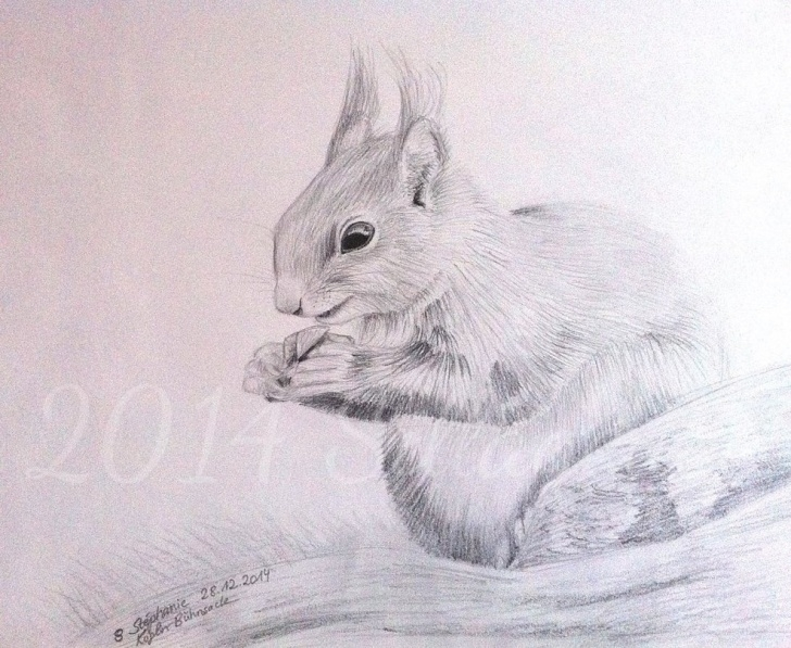 Marvelous Squirrel Pencil Sketch Techniques Squirrel (Pencil Drawing) By Sillageuse On Deviantart Pics