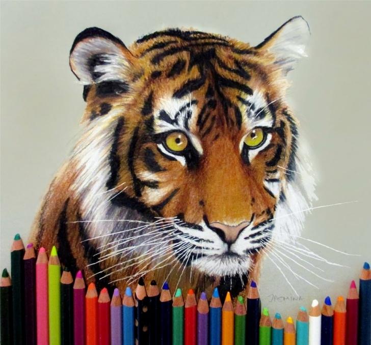 Marvelous Tiger Colored Pencil Drawing Techniques for Beginners Tiger Colored Pencil Drawing By Jasminasusak On Deviantart Images