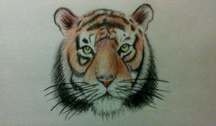 Marvelous Tiger Face Drawing Pencil Ideas How To Draw A Simple Tiger Face Easy? Watercolor Pencils. Image