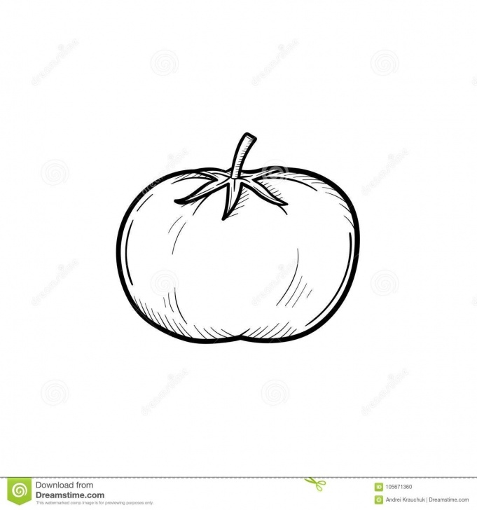 Marvelous Tomato Pencil Drawing Easy Tomato Hand Drawn Sketch Icon. Stock Vector - Illustration Of Draw Pics