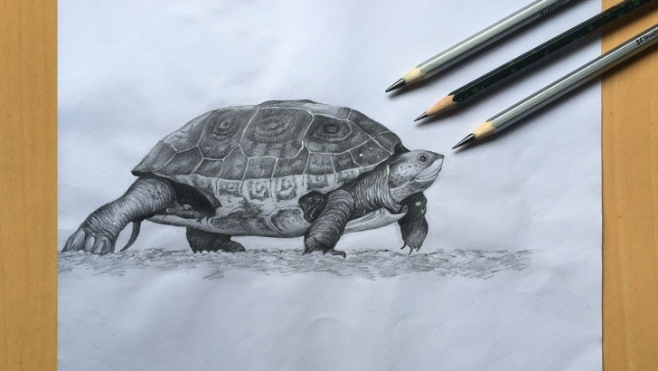 Marvelous Turtle Pencil Drawing Simple Turtle Drawing In Pencil | Sea Turtle Pencil Sketch Step By Step Picture
