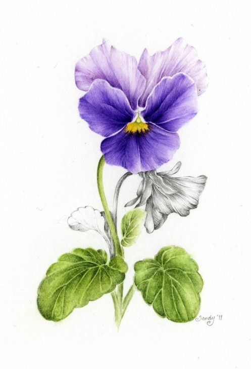 Marvelous Watercolor Pencil Flowers Courses Watercolor Pencil | Pansy Watercolor Pencil | Watercolor Pencil In Photo