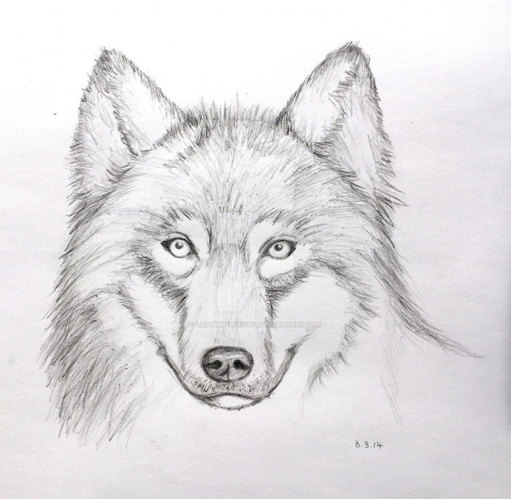 Marvelous Wolf Pencil Art Ideas Wolf Face Pencil Drawing (Mark Crilley Video) By Ladyimperfectus On Photo