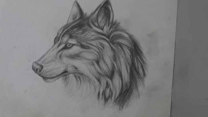 Marvelous Wolf Pencil Sketch Simple Pencil Drawing Of A Wolf - Long Version Photo