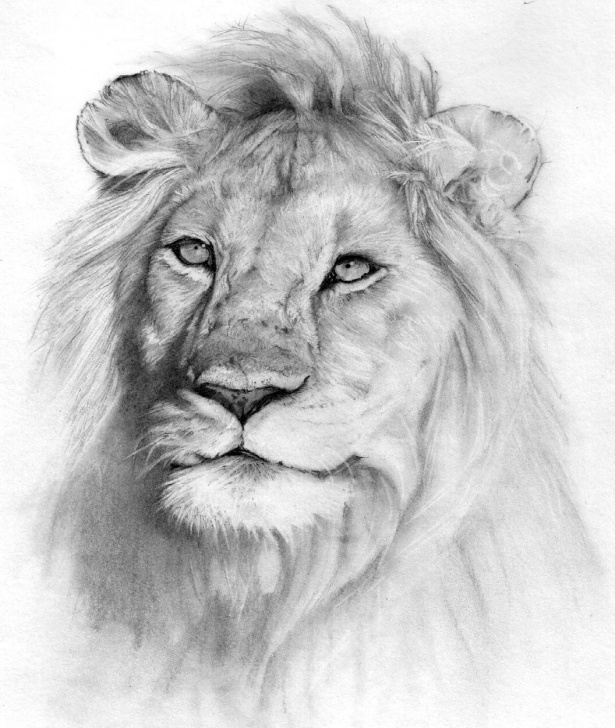 Most Inspiring Animal Drawing Pencil Step by Step Nature Animals Drawings | Fourwallsonly | Drawing | Pencil Images