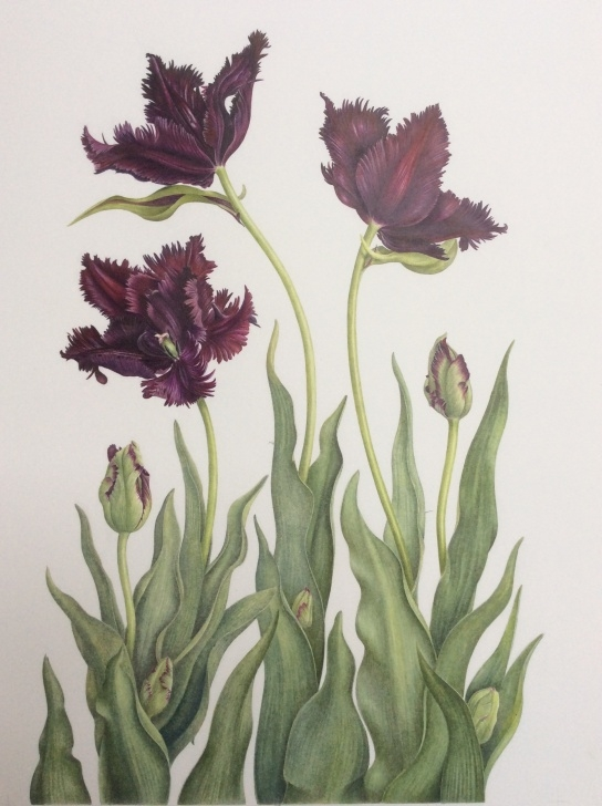Most Inspiring Ann Swan Botanical Artist Techniques Finally Finished And Off To A New Home - Ann Swan Pictures