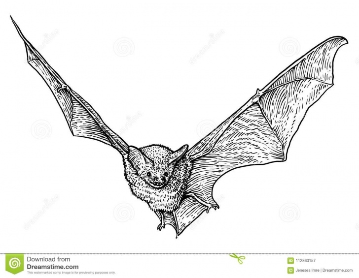 Most Inspiring Bat Pencil Drawing Ideas Bat Illustration, Drawing, Engraving, Ink, Line Art, Vector Stock Pic