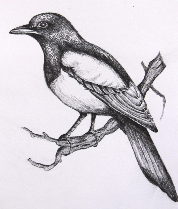 Most Inspiring Birds Pencil Drawing Step by Step Birds Pencil Sketch : Drawing Pics