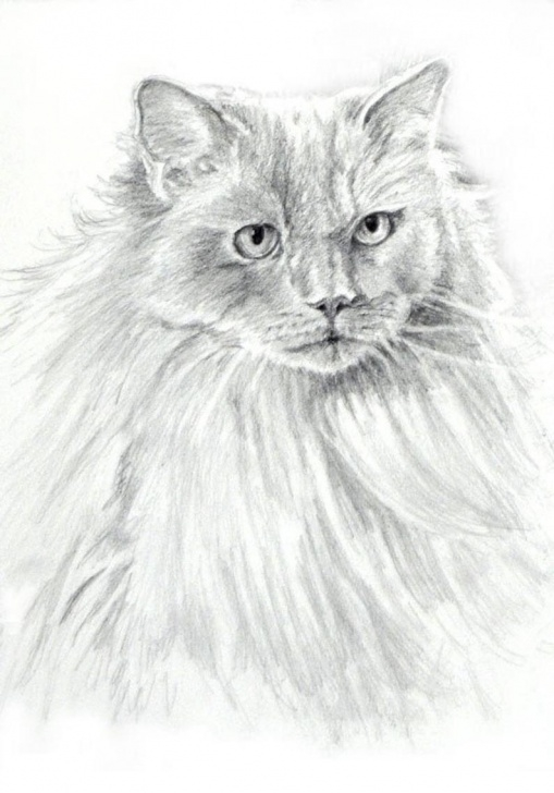 Most Inspiring Cat Pencil Art Step by Step Ragdoll Cat Drawing Art Print, Ragdoll Cat B/w Print, Ragdoll Cat Pencil  Art, Cat Drawing, Cat Pencil Drawing By P. Tarlow Image