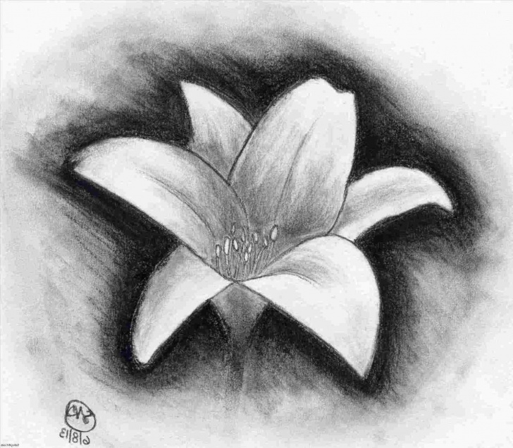 Most Inspiring Charcoal Drawing For Beginners Techniques for Beginners Easy Charcoal Flower Drawing Picture