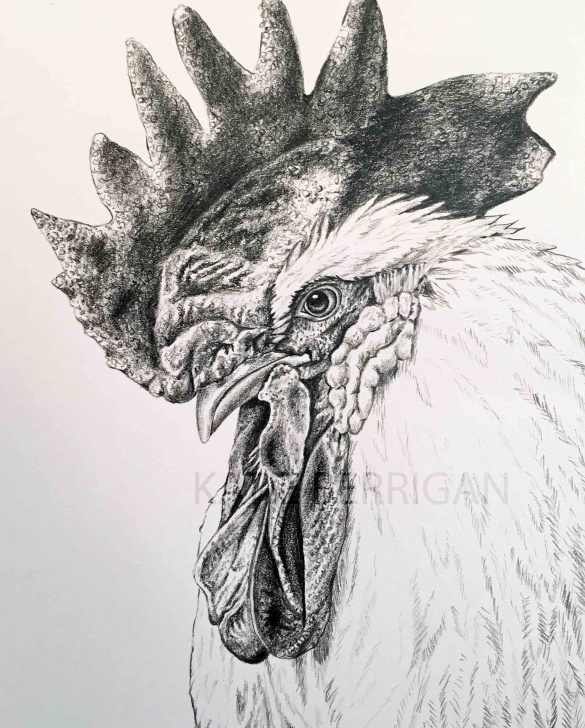 Most Inspiring Chicken Pencil Drawing Techniques Rooster Graphite Pencil Drawing/ Bird Drawing Www.kberriganart Picture