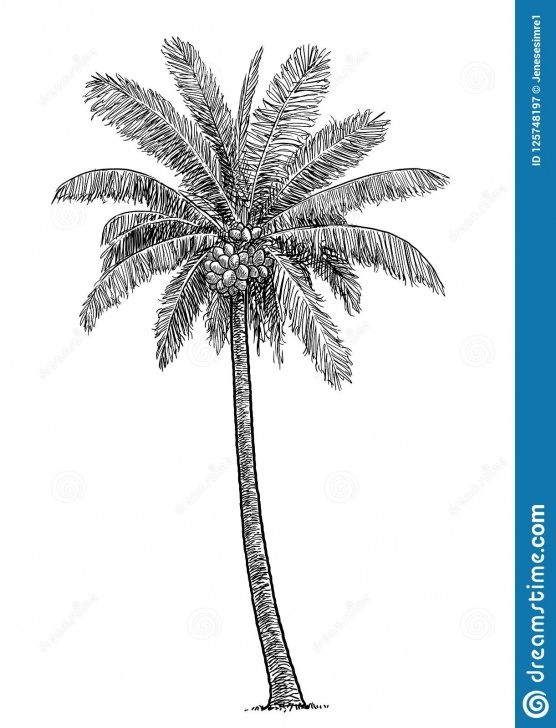Most Inspiring Coconut Tree Pencil Drawing Free Coconut Tree Illustration, Drawing, Engraving, Ink, Line Art, Vector Pics
