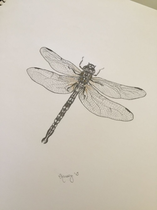 Most Inspiring Dragonfly Pencil Drawing Lessons Dragonfly Pencil Drawing By Chrissy Malvaso | L E T ' S D R A W Pic
