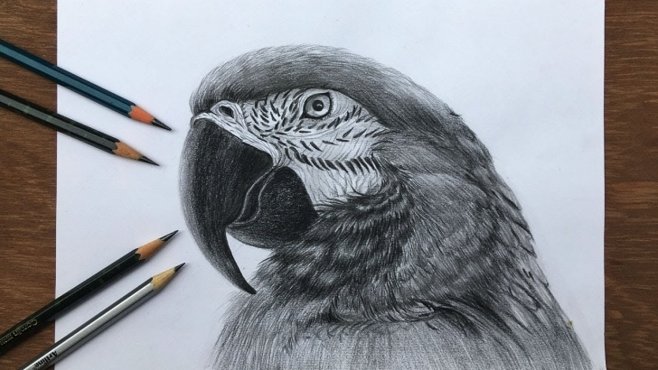 Most Inspiring Drawing Pencil Sketches Art Lessons How To Draw A Realistic Macaw In Pencil | Bird Drawing | Pencil Sketch Pic