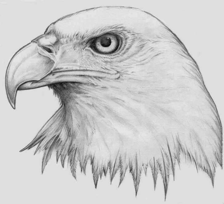 Eagle Pencil Drawing