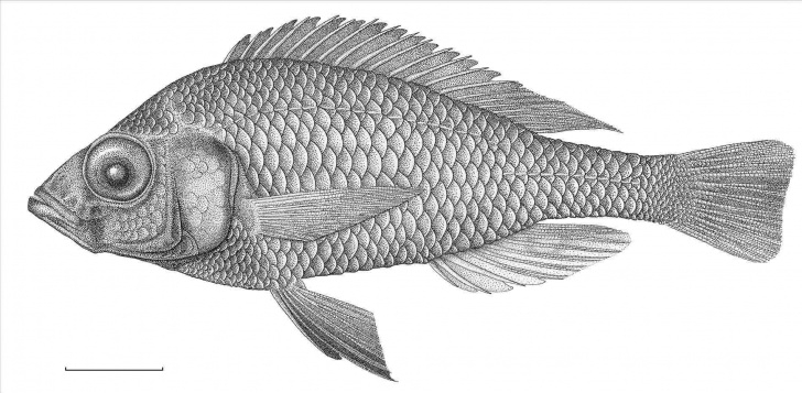 Most Inspiring Fish Pencil Art Easy Fish Pencil Drawing At Paintingvalley | Explore Collection Of Images
