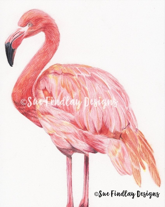Flamingo Pencil Drawing
