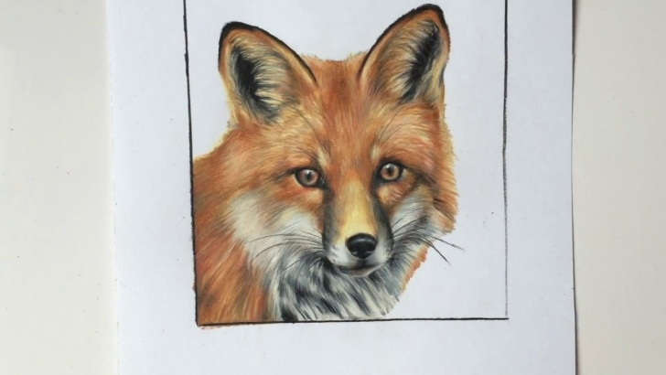 Most Inspiring Fox Pencil Drawing Courses Fox Colored Pencil Drawing Images