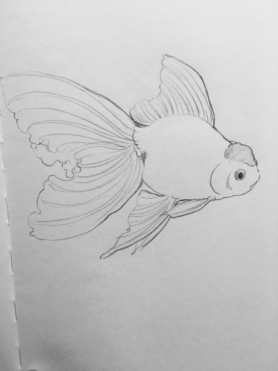 Most Inspiring Goldfish Pencil Drawing Lessons Pin By Alina Klaseva On Painting In 2019 | Fish Drawings, Art Photo