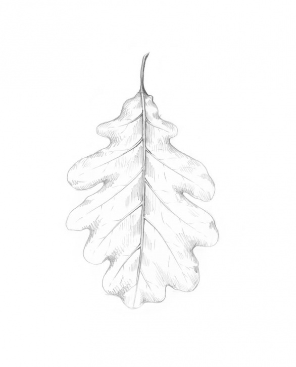 Most Inspiring Leaf Pencil Shading Step by Step How To Draw A Leaf Step By Step Image