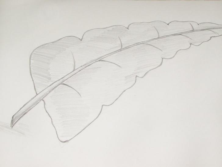Most Inspiring Leaf Pencil Sketch Ideas Banana Pencil Sketch And Pencil Sketches Of Leaves How To Draw Or Photos