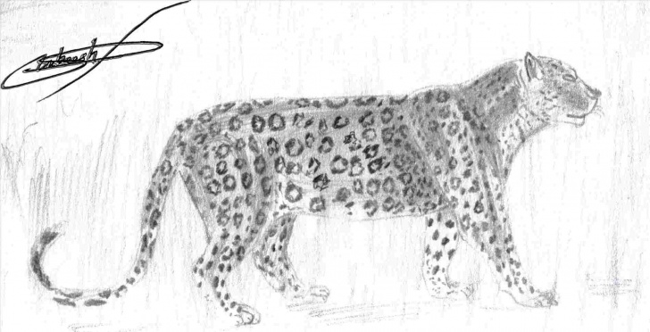 Most Inspiring Leopard Pencil Drawing Lessons Leopard Pencil Drawing - Gigantesdescalzos - Gigantesdescalzos Pics