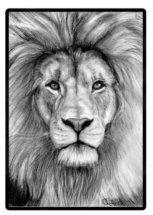 Most Inspiring Lion Face Pencil Drawing Tutorials The Lion Face Pencil Drawing Lion And Accuser Throne Ministries Tattoo Pic