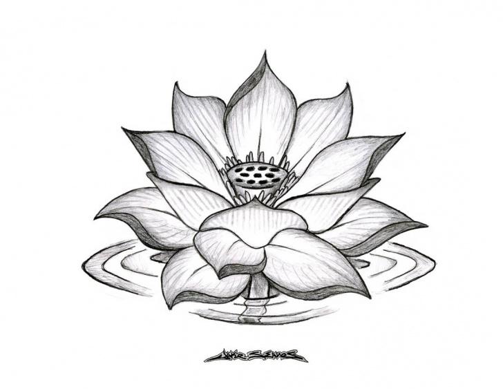 Lotus Pencil Drawing