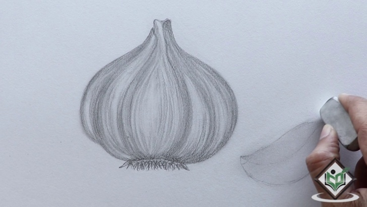 Most Inspiring Onion Pencil Drawing Free How To Sketch A Garlic Pictures