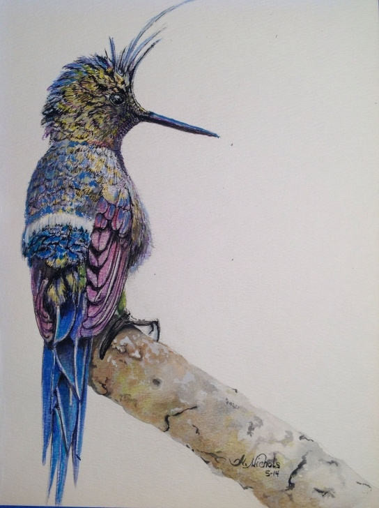 Most Inspiring Pencil And Watercolor Step by Step Wire-Crested Thorntail Colored Pencil And Watercolor (For Sale See Photo