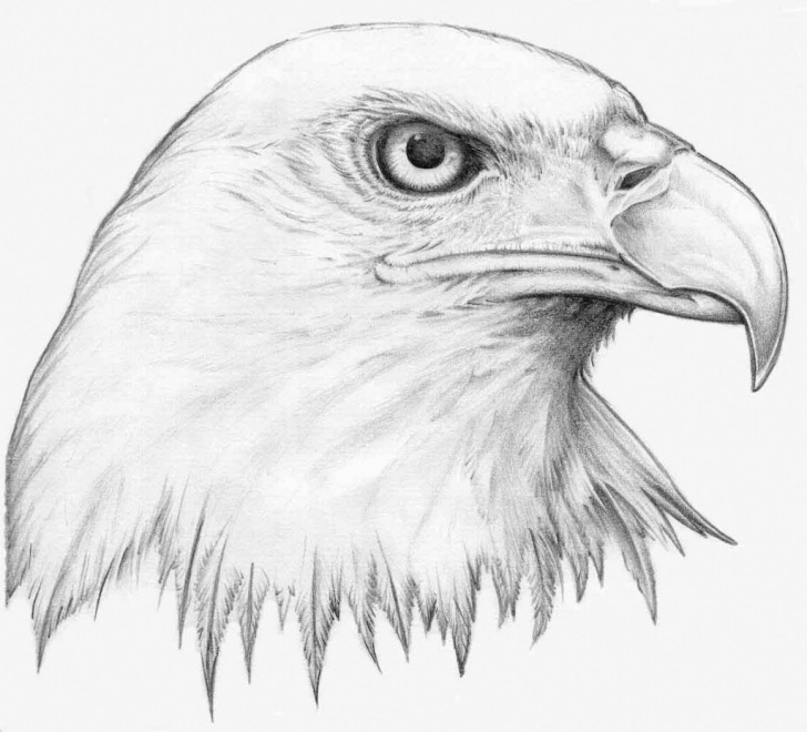 Most Inspiring Pencil Art Animals for Beginners Animal Drawing, Pencil, Sketch, Colorful, Realistic Art Images Pic