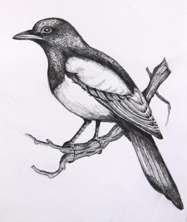 Most Inspiring Pencil Drawings Of Birds And Animals Free Pencil Sketches Of Birds At Paintingvalley | Explore Collection Images