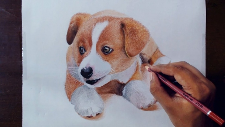 Most Inspiring Pencil Drawings Of Puppies Simple Drawing Animals 2 - Drawing A Puppy - Colored Pencils Photo