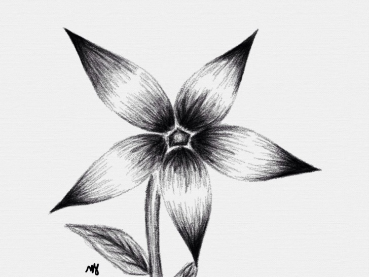 Most Inspiring Pencil Shading Flowers Tutorials Easy Pencil Shading Drawings Flower And Flowers Pencil Shading Pic