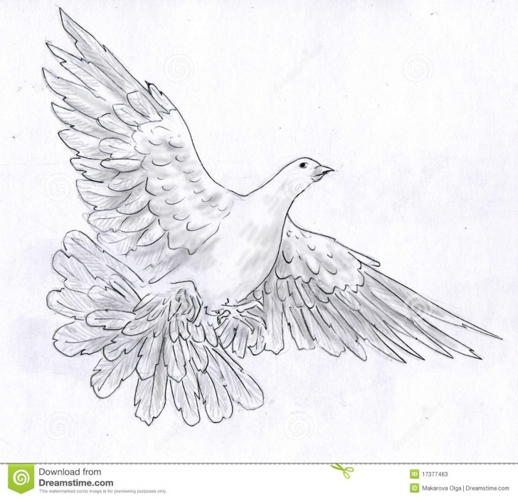 Most Inspiring Pigeon Pencil Sketch Free White Dove - Pencil Sketch Stock Illustration. Illustration Of Pictures
