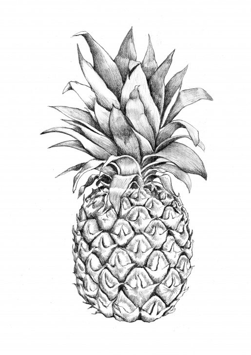 Most Inspiring Pineapple Pencil Drawing Lessons Images For > Pineapple Graphic Design | Pineapples | Pinapple Photos