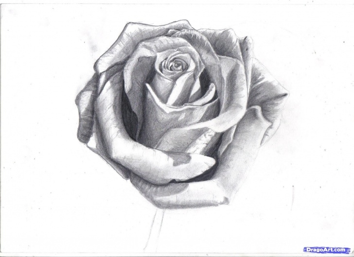 Most Inspiring Rose Pencil Drawing Techniques for Beginners How To Draw A Rose In Pencil, Draw A Realistic Rose, Step By Step Pictures