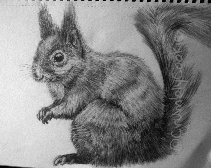Most Inspiring Squirrel Pencil Sketch Techniques for Beginners Squirrel Pencil Drawing ? | Art Amino Image