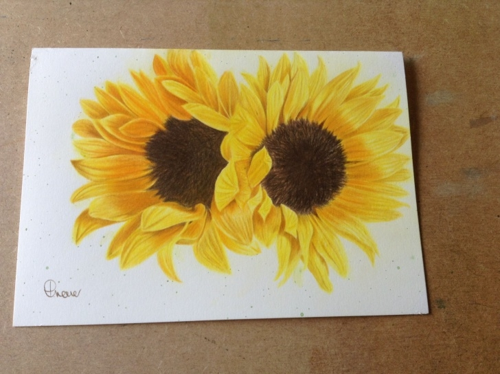 Most Inspiring Sunflower Colored Pencil Tutorials Sunflowers Faber Castell Polychromos | Colored Pencil Art | Color Pics