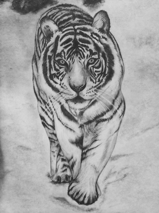 Most Inspiring Tiger Pencil Art Tutorials White Tiger Pencil Drawing, Done By Danielle Weingart | Artwork In Pictures