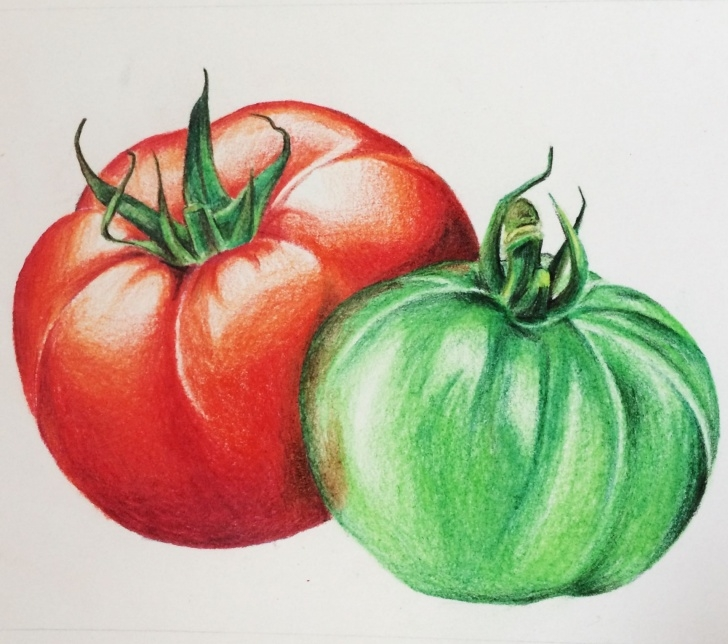 Most Inspiring Tomato Pencil Drawing Techniques Tomato, Tomatoes, Drawing, Illustration, Помидоры, Иллюстрация Picture