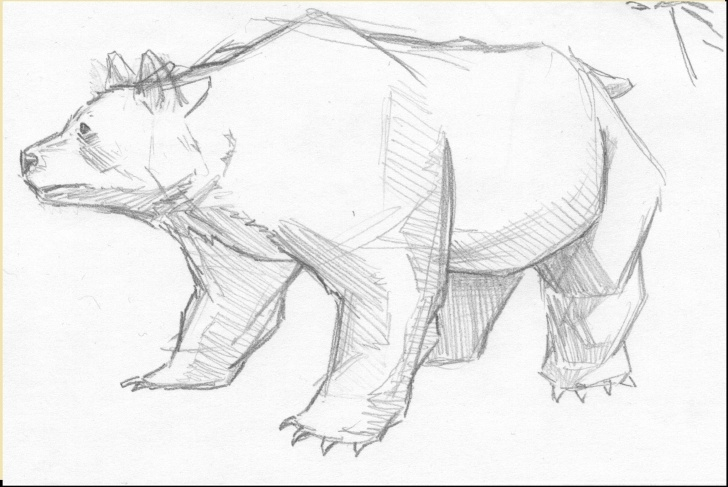 Nice Bear Pencil Drawing Easy Bear Pencil Sketch At Paintingvalley | Explore Collection Of Picture