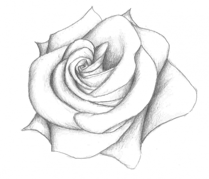 Nice Beautiful Pencil Sketches Of Roses Courses Beautiful Flower Sketches In Pencil - Draw Pencil Pics