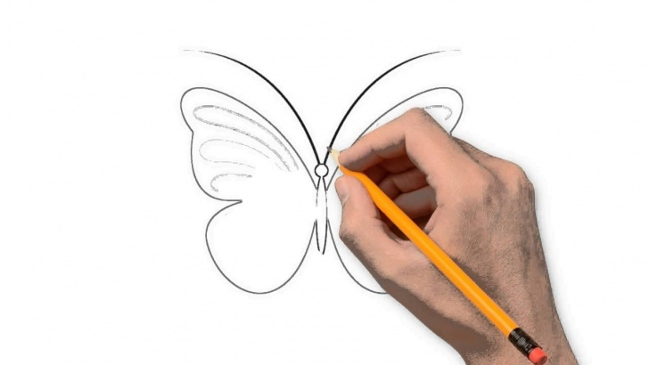 Nice Butterfly Drawings In Pencil Tutorial Butterfly Nature Pencil To Draw Step By Step Pictures