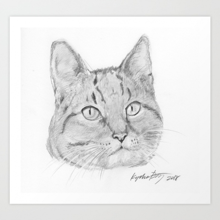 Nice Cat Pencil Sketch Techniques for Beginners Cat Face Realistic Pencil Sketch Drawing Art Print Pics
