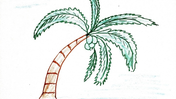 Nice Coconut Tree Pencil Drawing for Beginners Coconut Tree Pencil Sketch And Sketch A Palm Tree How To Draw Simple Image