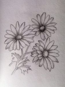 Nice Daisy Pencil Drawing Easy My Practice #daisy #pencil #sketch #draw | Pencil Floral Sketch In Images